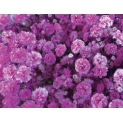 Gyp Hot Pink