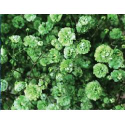 Gyp Green