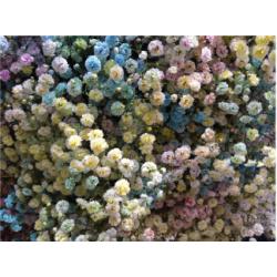 Gyp Rainbow Ligth