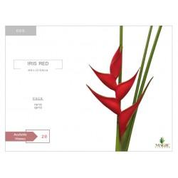 Heliconia Iris Red