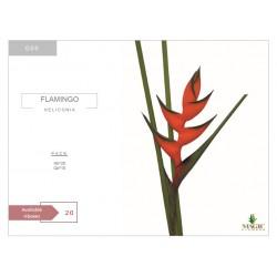 Heliconia Flamingo