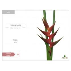Heliconia Xl Terracota