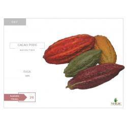 Novelties Cacao Pods
